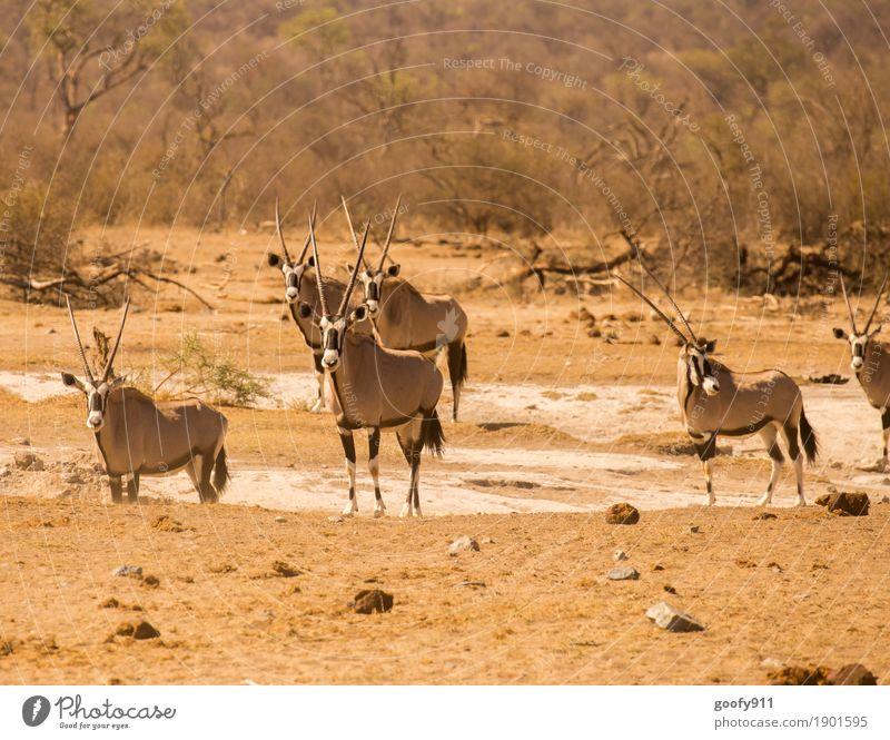 Alles im Blick!!! Natur Sommer Baum Landschaft Tier Wärme Umwelt Herbst Frühling außergewöhnlich Stein Sand Erde Tierpaar Wildtier Sträucher