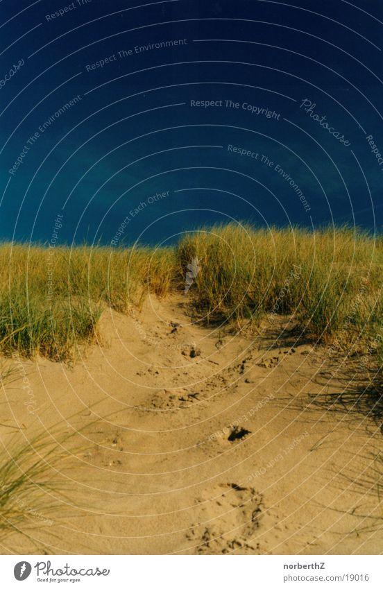 Düne Himmel blau Strand Gras Sand Stranddüne Niederlande