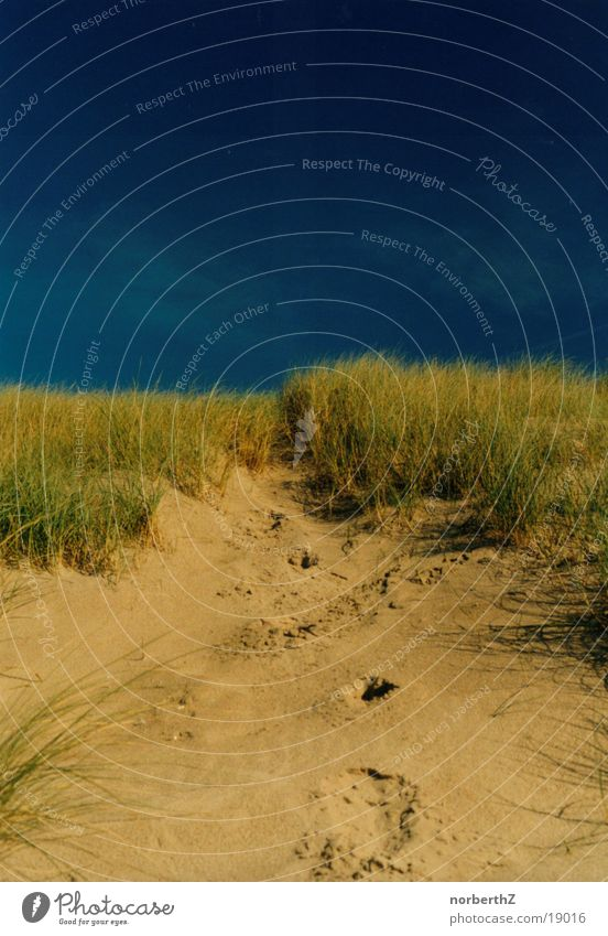 Düne Niederlande Strand Gras blau Stranddüne Sand Himmel