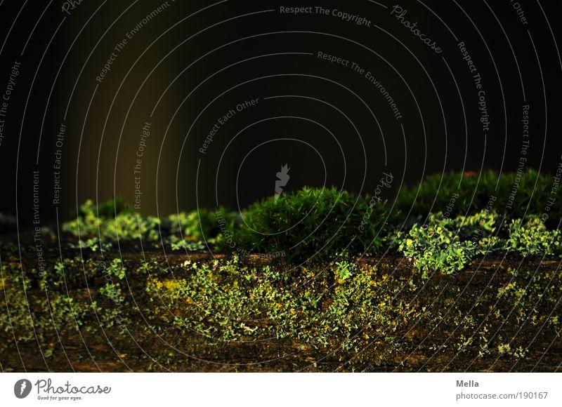 Moosige Zeiten Umwelt Natur Pflanze Flechten Wachstum dunkel nah natürlich grün ruhig Farbfoto Gedeckte Farben Außenaufnahme Nahaufnahme Detailaufnahme