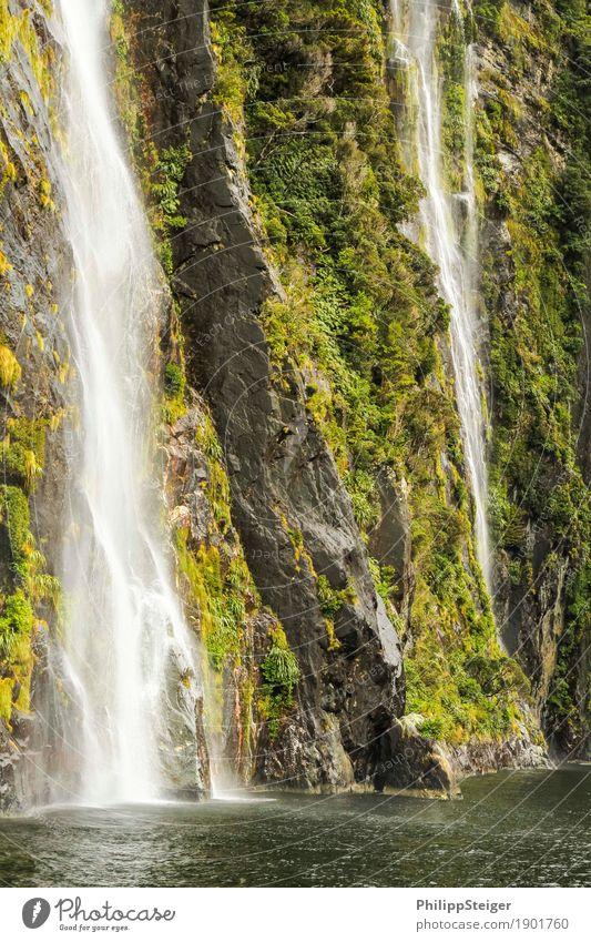 Milford Sound Natur Pflanze grün Wasser Meer Landschaft ruhig Berge u. Gebirge Umwelt natürlich Küste außergewöhnlich Felsen frisch Kraft Sträucher