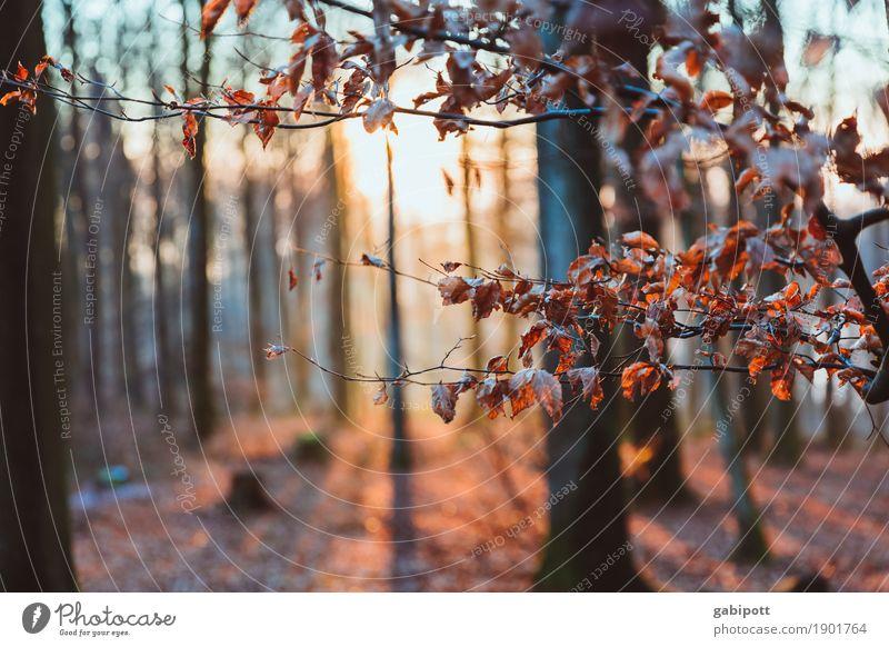 Sonne | Genießen Natur Landschaft Winter Wetter Schönes Wetter Eis Frost Pflanze Baum Blatt Wald atmen Duft Erholung Sonnenstrahlen kalt Pfälzerwald Laubbaum