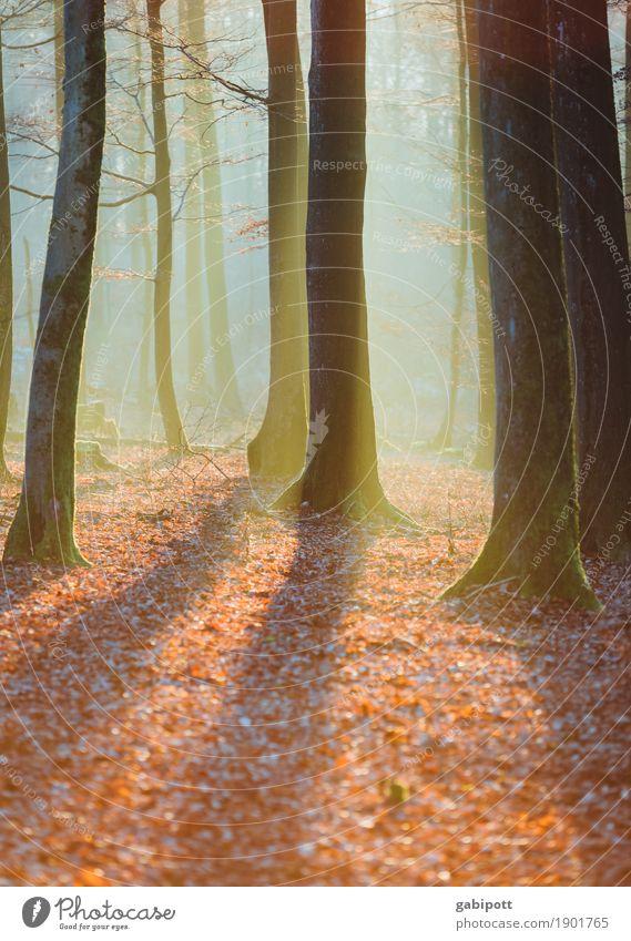 Pfälzer Wald Umwelt Natur Landschaft Pflanze Herbst Baum Blatt Laubbaum Waldboden Duft blau braun Erholung Farbe nachhaltig Herbstwald Nebelschleier Dunst