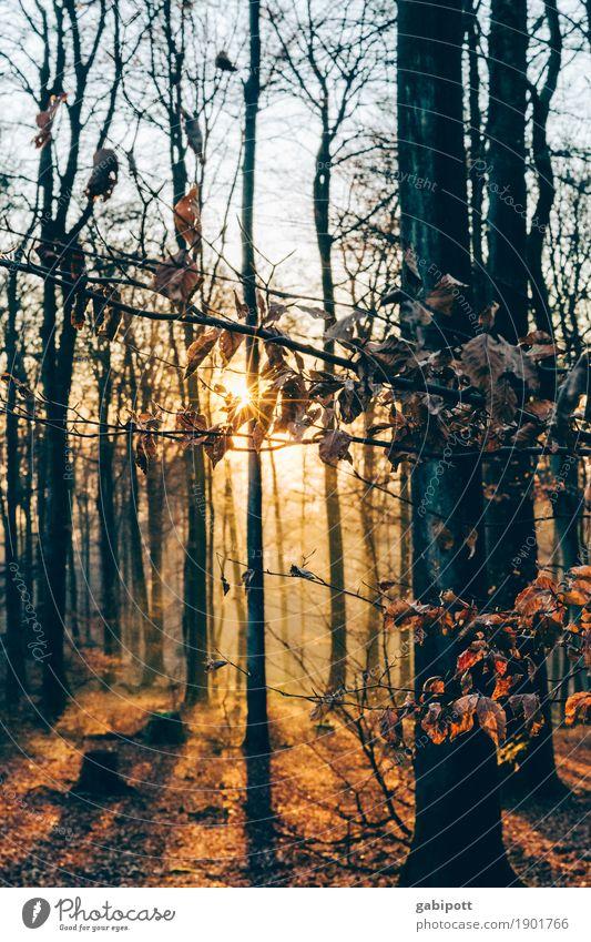 Pfälzer Wald Umwelt Natur Landschaft Erde Sonnenlicht Herbst Schönes Wetter Pflanze Waldboden Laubbaum Blatt Lebensfreude schön achtsam Freizeit & Hobby