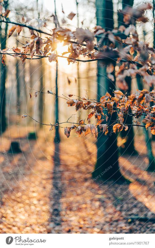 Pfälzer Wald Natur Pflanze Baum Landschaft Erholung gelb Umwelt Herbst Gesundheit natürlich Bewegung braun orange Zufriedenheit Erde