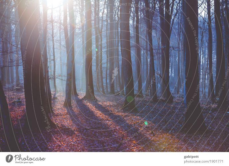 Bevor der Schnee kam Umwelt Natur Landschaft Erde Sonne Herbst Winter Klima Wetter Schönes Wetter Eis Frost Pflanze Baum Laubwald Blatt Wald Erholung verblüht