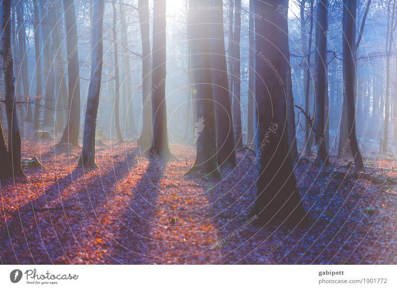 Nebelwald quer Natur Baum Landschaft Erholung Blatt ruhig Winter Wald Berge u. Gebirge Umwelt Leben Herbst Stimmung träumen wandern