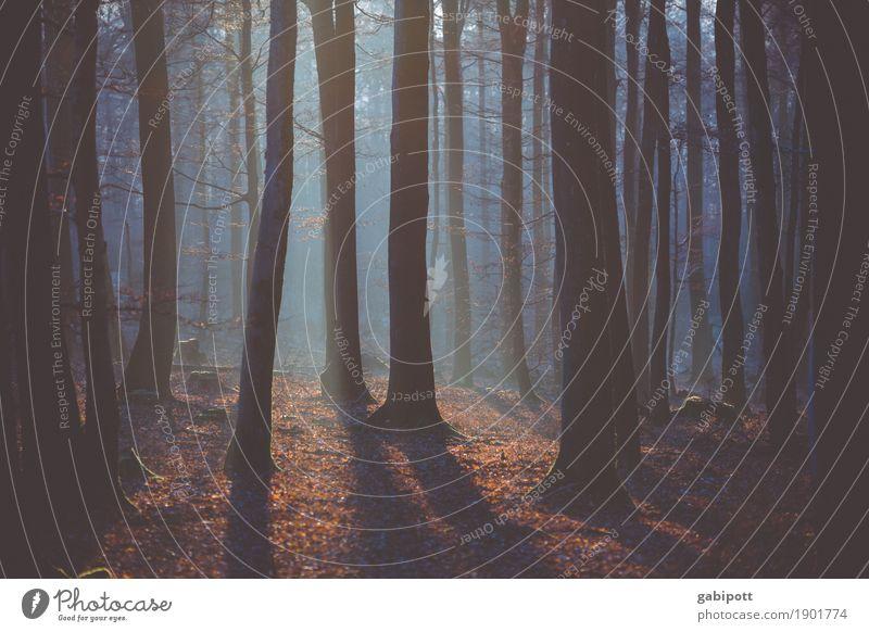 Licht und Schatten Ausflug Abenteuer Natur Landschaft Pflanze Urelemente Luft Herbst Winter Schönes Wetter Baum Wald atmen Leben Zufriedenheit ruhig Wachstum