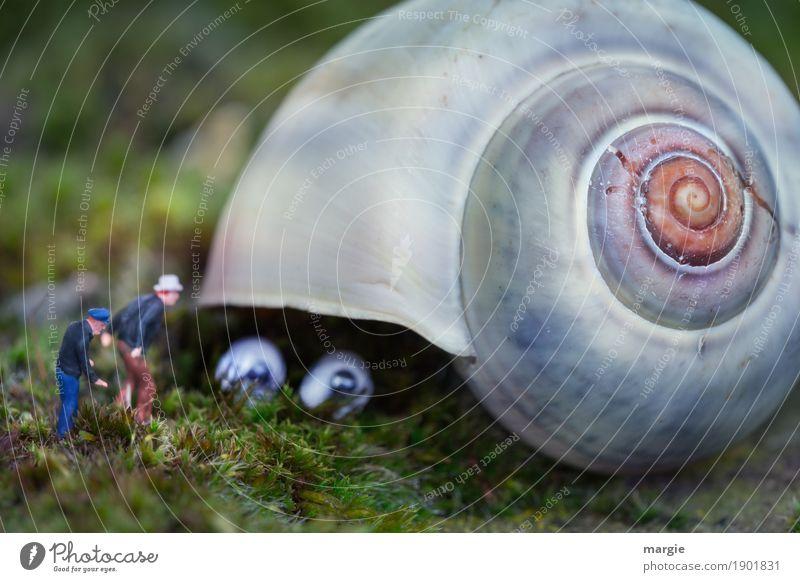 Miniwelten - Ungeheuer Mensch Pflanze grün Tier Auge Gras grau maskulin Angst Wildtier beobachten Neugier Landwirtschaft Suche Überraschung Figur