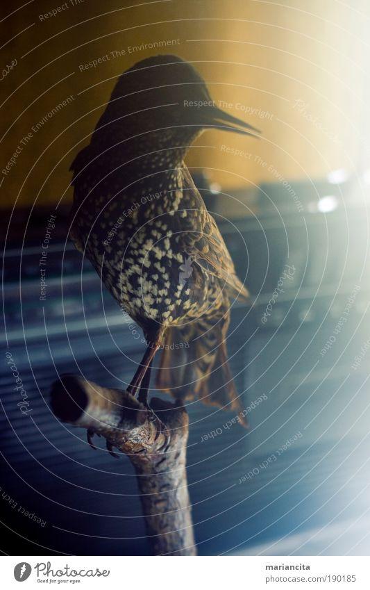 alt Winter Ferien & Urlaub & Reisen Tier Vogel elegant weich Häusliches Leben außergewöhnlich Gelassenheit Vergangenheit Radiogerät Inspiration Elektrisches Gerät Totes Tier