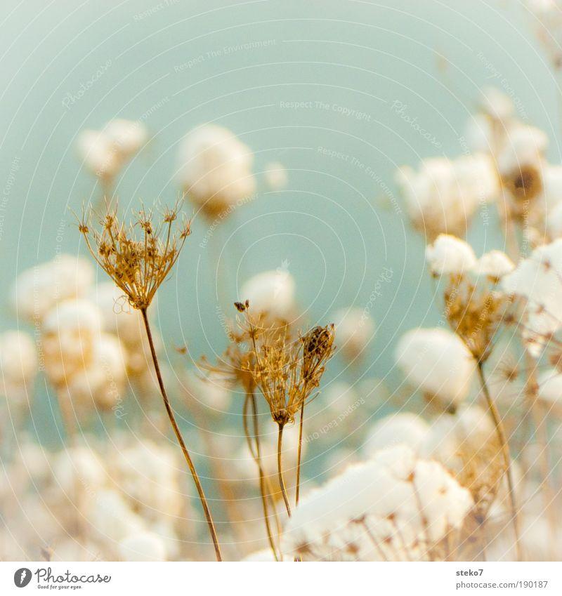 den Kopf frei machen Natur alt Pflanze weiß Blume Landschaft ruhig Winter kalt Schnee Feld Hoffnung trocken Stress Leichtigkeit Vorfreude