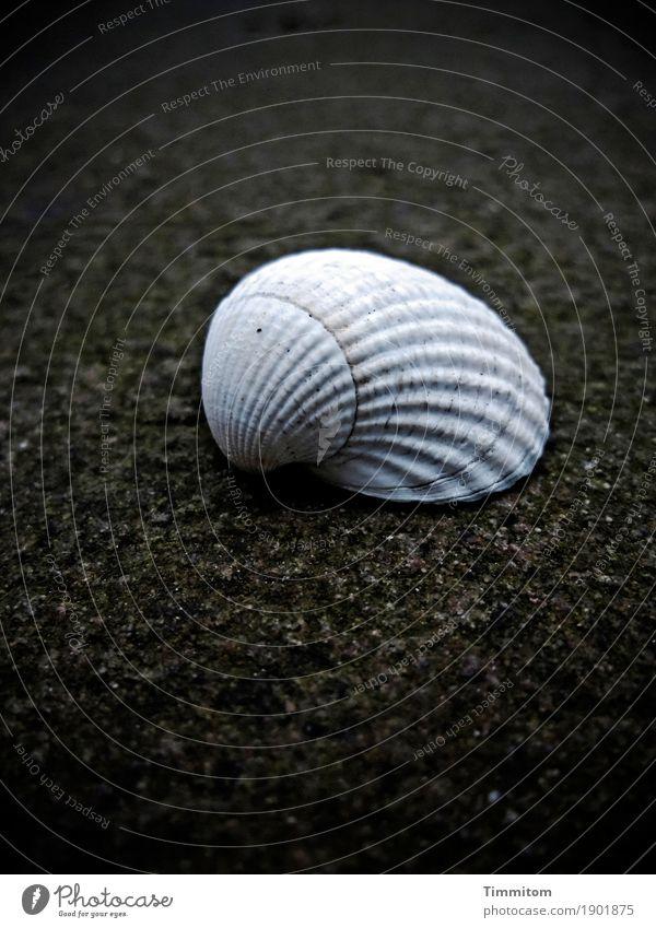 Sucht | nicht nach mir - es geht mir gut. Wege & Pfade Muschelschale Stein liegen dunkel einfach hell Sandstein einzeln Herzmuschel Farbfoto Außenaufnahme