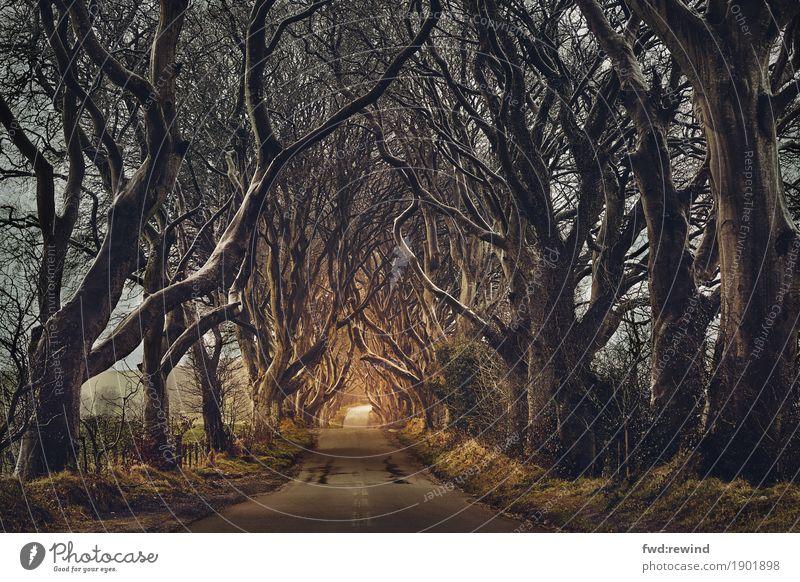 Kings Road Abenteuer Natur Landschaft Sonnenaufgang Sonnenuntergang Frühling Herbst Regen Wald Straße Wege & Pfade bedrohlich dunkel Ferne Unendlichkeit