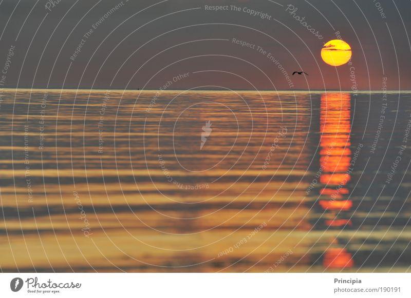 Fernweh Zufriedenheit ruhig Ferien & Urlaub & Reisen Ferne Sonne Meer Landschaft Wasser Sonnenaufgang Sonnenuntergang Schönes Wetter Ostsee Unendlichkeit Wärme