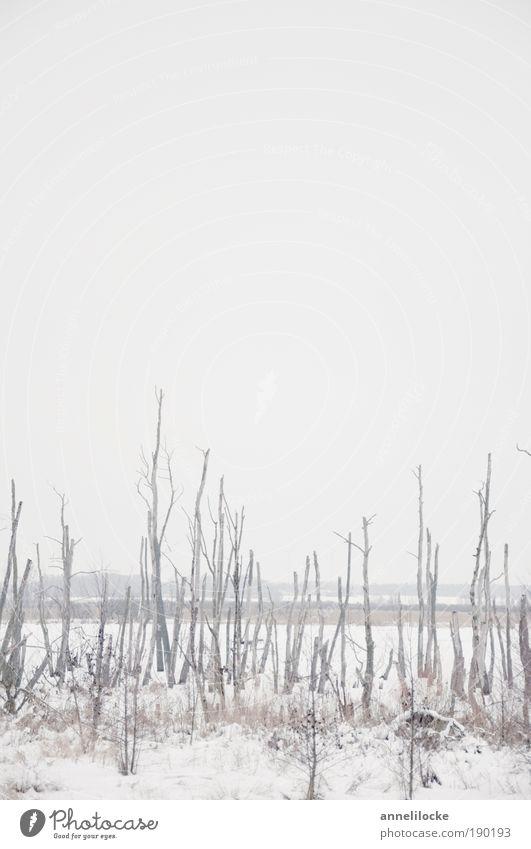 eisiges Moor Natur Wasser weiß Baum Winter ruhig Ferne kalt Schnee Tod Landschaft Umwelt Wetter Eis Ausflug Nebel