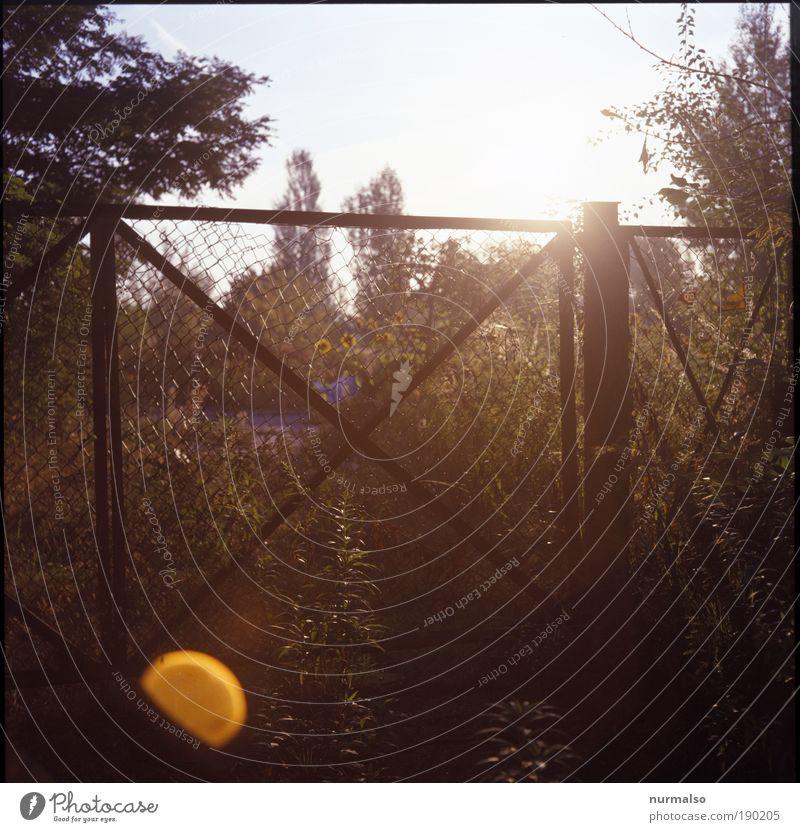 eingesperrter Sonnenschein Natur Pflanze Umwelt Landschaft Gefühle Freiheit Wärme Garten träumen hell Park Feld glänzend ästhetisch Warmherzigkeit Lächeln