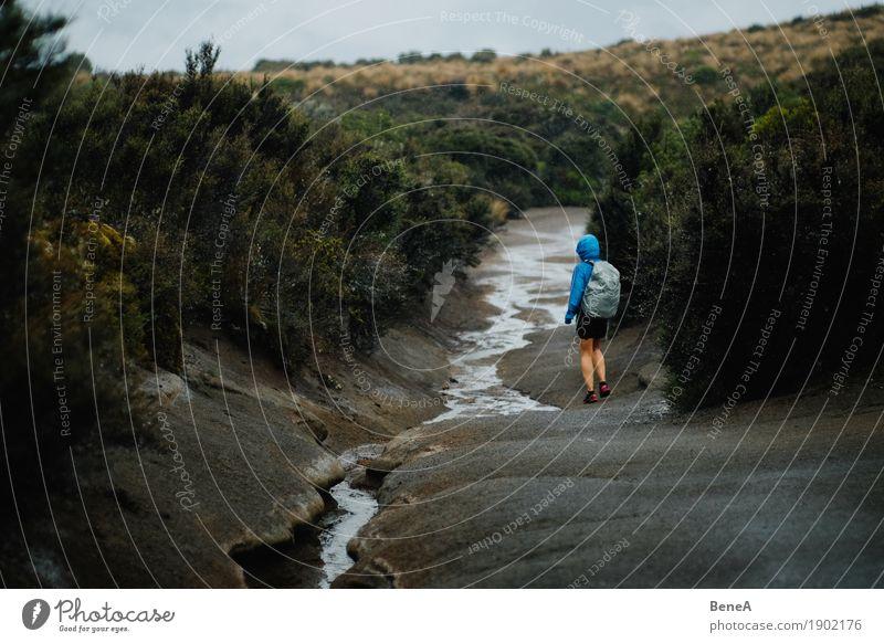 Wanderer in verregneter Buschlandschaft an einem Bach Mensch Frau Natur Ferien & Urlaub & Reisen Erwachsene Umwelt Wege & Pfade Sport Regen Freizeit & Hobby