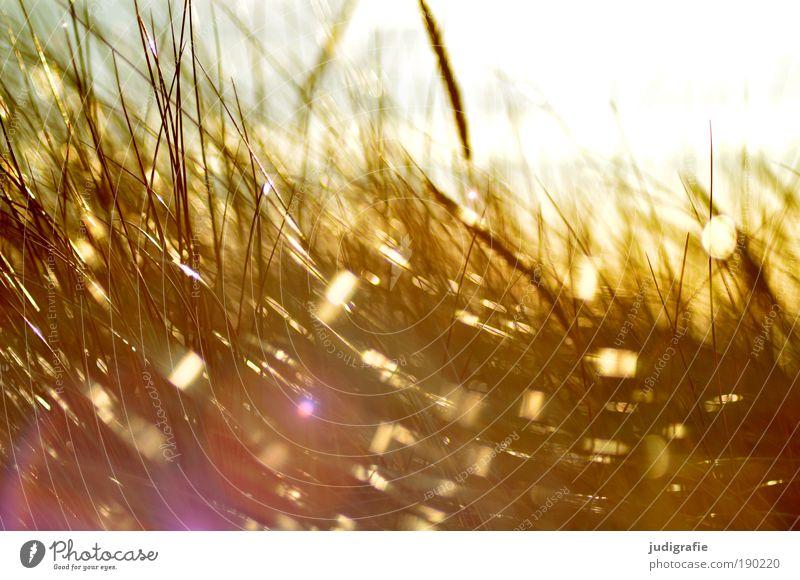 Gras Natur Sonne Pflanze Strand Bewegung hell Stimmung Küste glänzend Wind Umwelt Meer Wachstum Klima Sturm