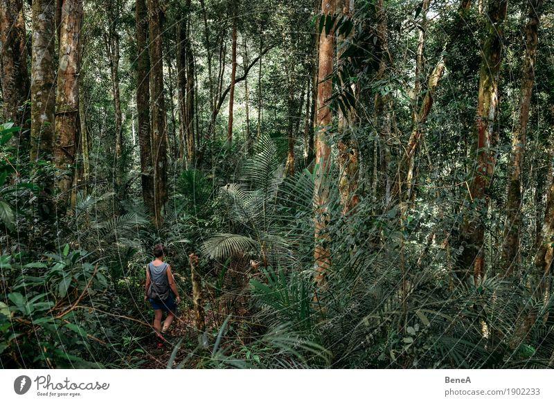 Frau wandert durch dicht bewachsenen Urwald Getränk Ferien & Urlaub & Reisen Tourismus Ferne Expedition wandern Mensch feminin Erwachsene 1 Pflanze Baum