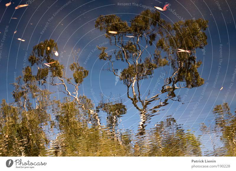 eukalyptus tree Himmel Natur Wasser grün Baum Pflanze Sommer ruhig Umwelt Wärme Denken See Australien Wasserstelle Eukalyptusbaum