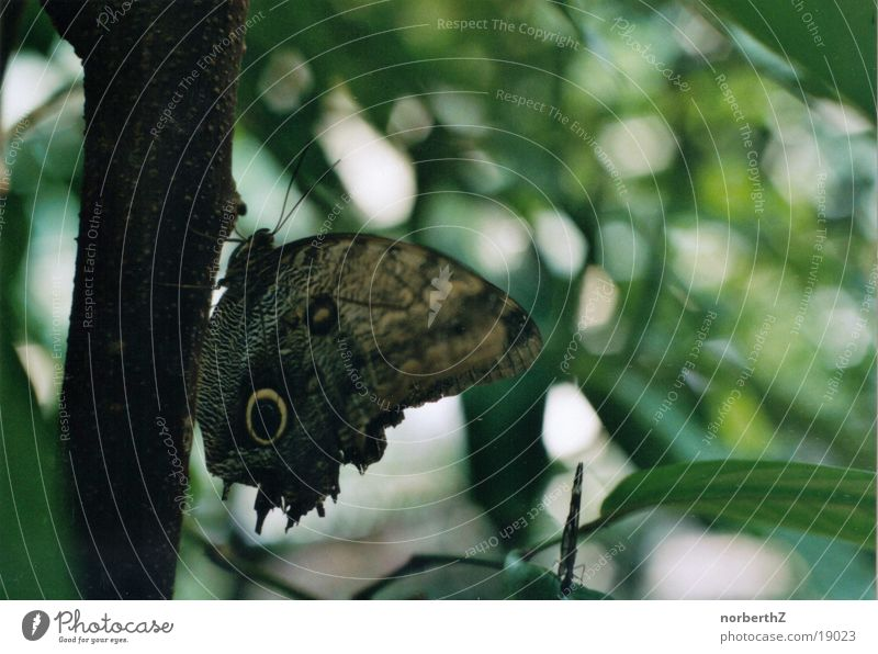 Schmetterling grün Blatt krabbeln Verkehr Auge Baumstamm