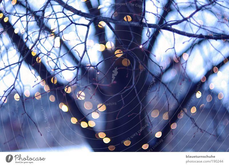 Lichterkette Winter Pflanze Baum kalt Baumstamm Baumkrone Ast Zweige u. Äste Unschärfe Abend Farbfoto Außenaufnahme Menschenleer Dämmerung