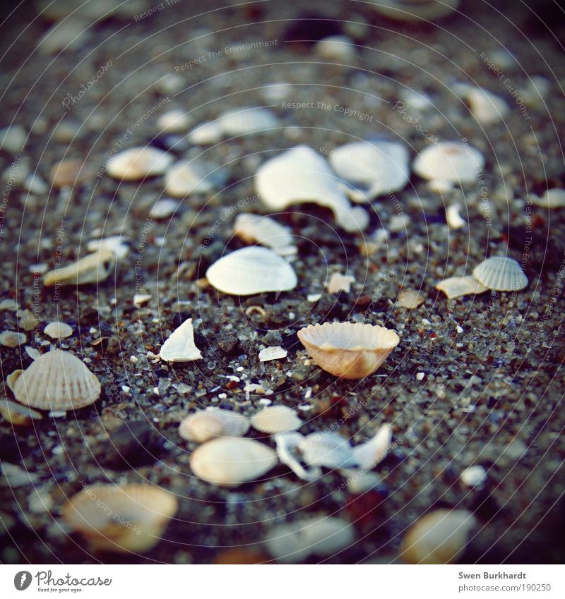 Kopf hoch Natur Ferien & Urlaub & Reisen Sommer Meer Winter Strand Tier Erholung Umwelt Herbst Sand Küste Erde Wellen Ausflug Insel