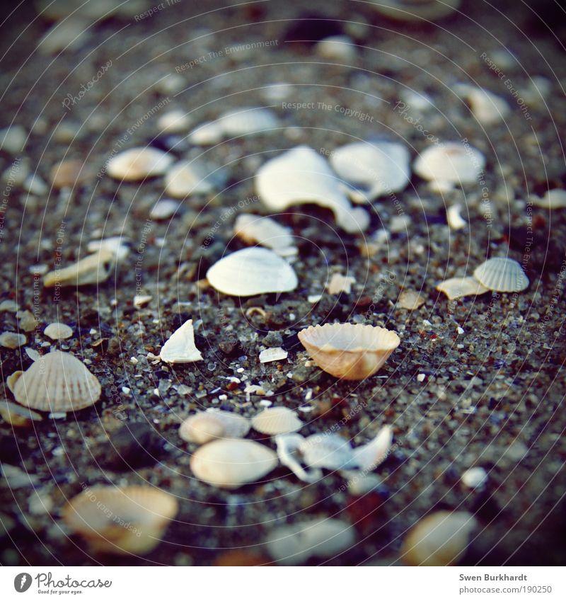 Kopf hoch Wohlgefühl Erholung Ferien & Urlaub & Reisen Ausflug Sommerurlaub Strand Meer Umwelt Natur Tier Erde Sand Herbst Winter Schönes Wetter Wellen Küste