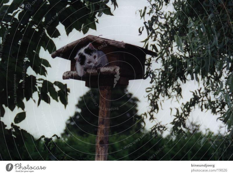 Katze im Vogelhaus Spielen Hauskatze Katzenbaby Futterhäuschen