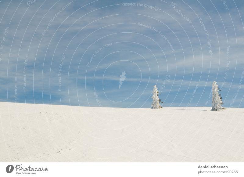 Eiszeit, blauweiß Himmel weiß blau Winter Ferne Schnee Freiheit Eis Wind Horizont paarweise Frost Klima Tanne Schönes Wetter Schwarzwald