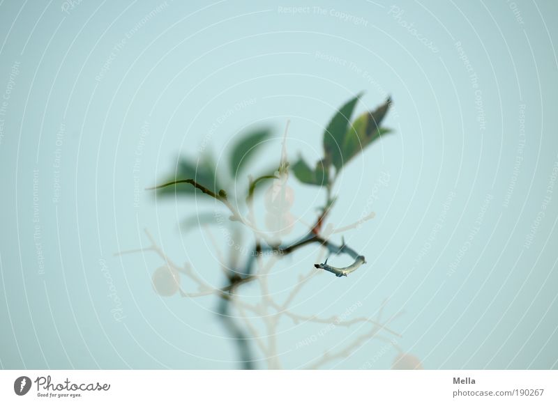 Wach' ich oder träum' ich? Natur Pflanze Blatt träumen Stimmung Umwelt Rose Wachstum natürlich außergewöhnlich stachelig Grünpflanze Wildpflanze Hundsrose