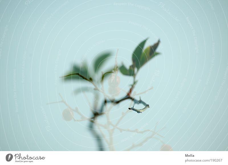 Wach' ich oder träum' ich? Umwelt Natur Pflanze Rose Blatt Grünpflanze Wildpflanze Hundsrose Wachstum außergewöhnlich natürlich stachelig Stimmung träumen