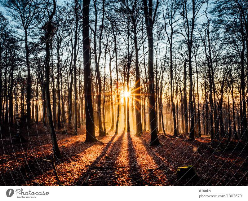 Schöner Schein Natur Pflanze Sonne Landschaft Wald Berge u. Gebirge Umwelt natürlich hell leuchten Ausflug wandern Schönes Wetter Pfälzerwald