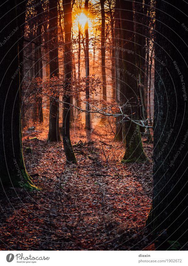 Backlight Forest Ferien & Urlaub & Reisen Ausflug Sonne wandern Umwelt Natur Landschaft Pflanze Sonnenaufgang Sonnenuntergang Sonnenlicht Baum Wald