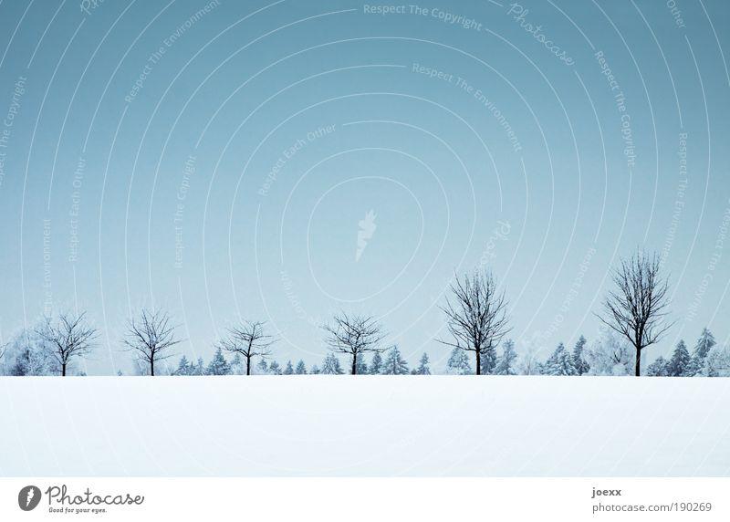 Erste Reihe Natur Landschaft Pflanze Wolkenloser Himmel Winter Eis Frost Schnee Baum Wald Hügel blau standhaft Schneelandschaft kahl Baumreihe Farbfoto