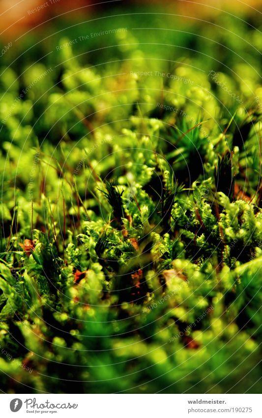 Moos Natur Pflanze Wachstum natürlich Moos Froschperspektive