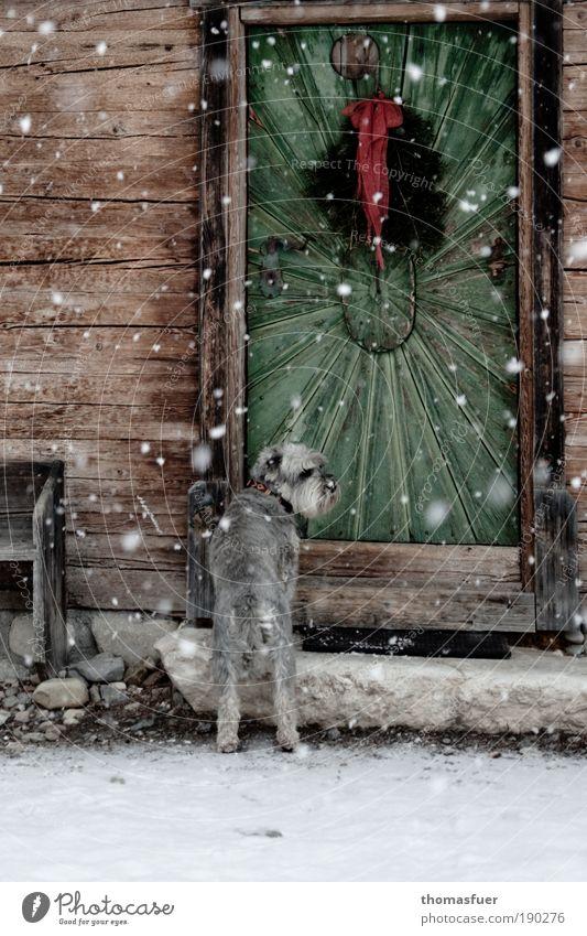 Hundekälte Winter Haus Tier kalt Schnee Schneefall Eis warten Tür Wetter Hoffnung Frost Klima Dorf Hütte