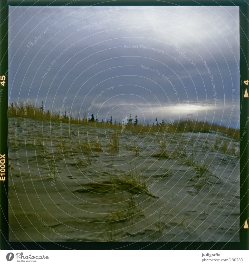 Abschied Umwelt Natur Landschaft Pflanze Himmel Klima Gras Küste Strand Ostsee natürlich Stimmung Einsamkeit Erwartung Idylle Traurigkeit Wandel & Veränderung
