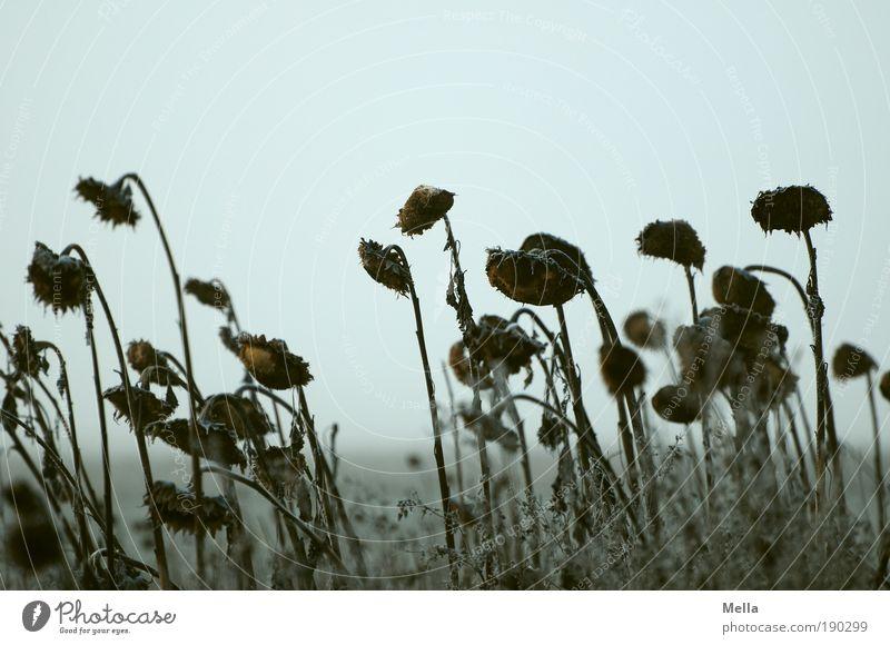 Warten Natur alt Himmel Blume Pflanze Winter dunkel kalt Herbst Tod grau Traurigkeit Landschaft Stimmung Feld Wetter