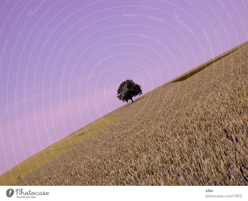 sonnentag Feld Baum Landschaft Pflanze Himmel