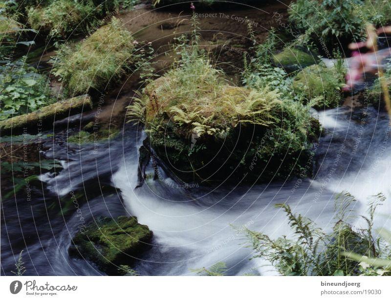 Wildbach Wasser Berge u. Gebirge Bach Strömung