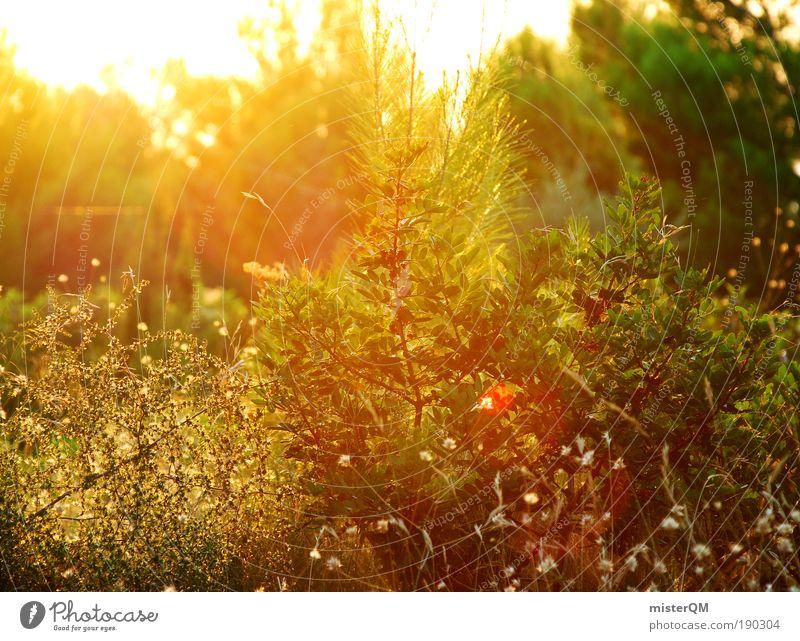 Romantico. Natur schön grün Pflanze Sommer Ferien & Urlaub & Reisen ruhig dunkel Erholung Landschaft Zufriedenheit Stimmung orange Umwelt gold