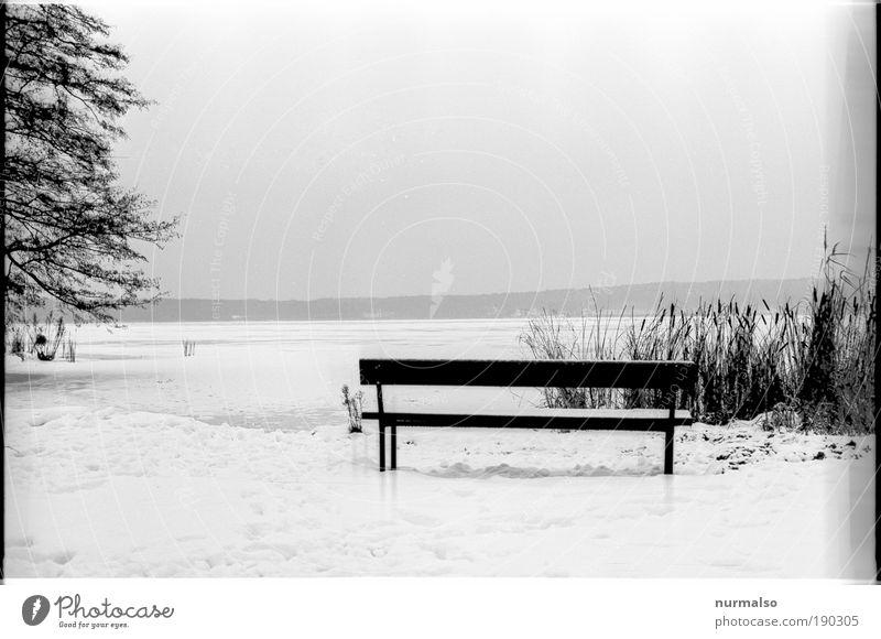 Platz am Wintergrau Ausflug Schnee wandern Kunst Natur Landschaft Wasser Klima Eis Frost Schilfrohr Pompesel Küste Seeufer Gemeinde Schwielowsee Bank atmen