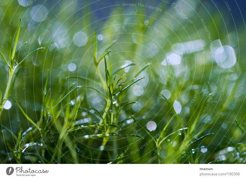 Feuchtgebiet Natur grün blau Pflanze Sommer Wiese Gras Frühling Park Makroaufnahme glänzend Wassertropfen nass frisch Fröhlichkeit rein