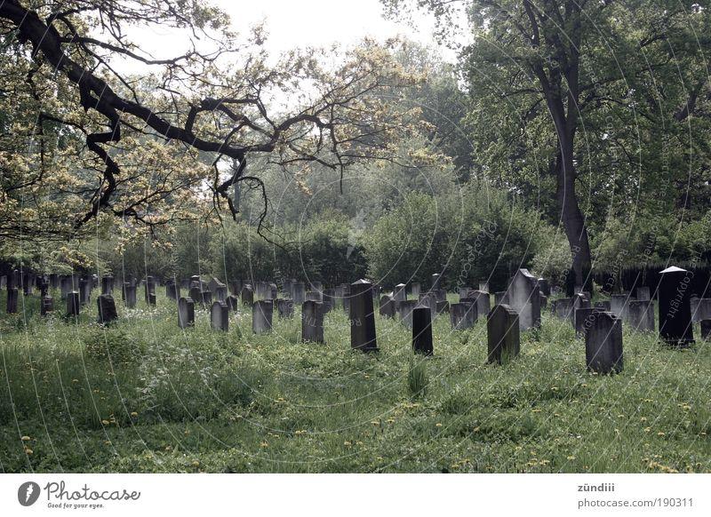 letzte Ruhe Grab ruhig Traurigkeit Tod Trauer Zeit ruhen Ewigkeit Grabmal Grabstein zeitlos Farbfoto Außenaufnahme Menschenleer Tag