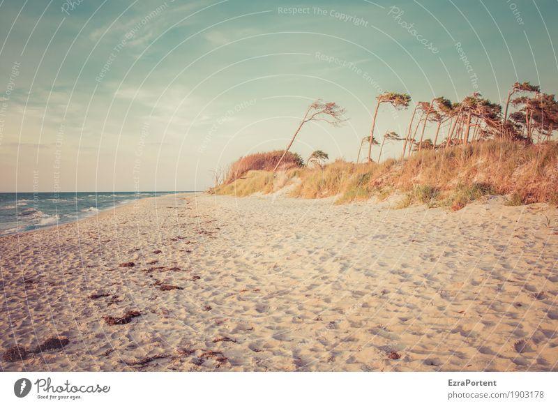. Erholung ruhig Ferien & Urlaub & Reisen Tourismus Umwelt Natur Landschaft Himmel Wolken Sommer Klima Wetter Schönes Wetter Baum Wellen Küste Strand Ostsee