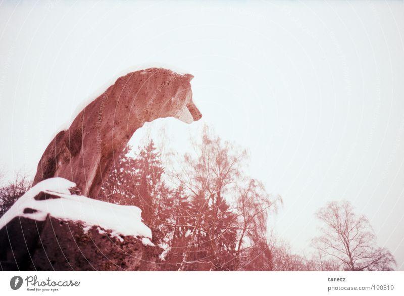 Wolf im Schafspelz Baum rot Winter Einsamkeit Tier kalt Schnee Stein warten Suche Aussicht 1 Sehnsucht Statue Stillleben Wachsamkeit