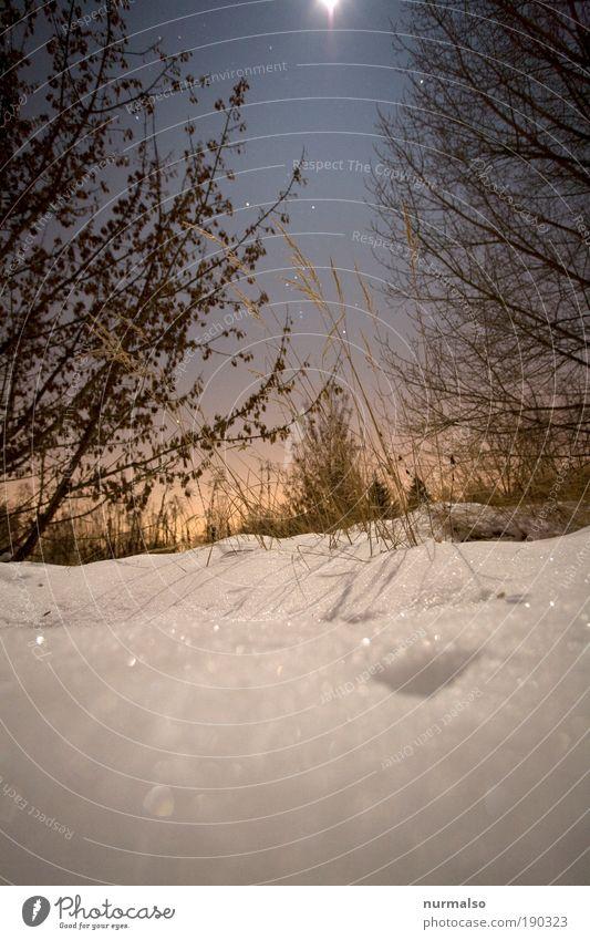 gestern Nacht -20 Grad Natur Himmel Winter ruhig kalt Schnee Stil Gras Garten Landschaft Eis Feld Kunst Stern glänzend ästhetisch