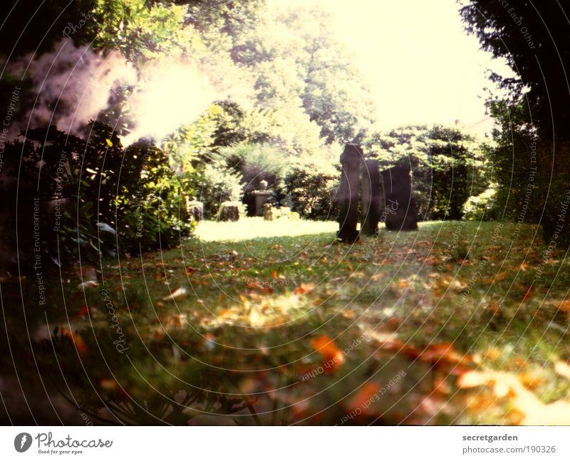 der körper ist der ausdruck der seele. Himmel Natur alt grün Baum dunkel Traurigkeit Herbst Gefühle Gras Tod Garten braun Park Angst gold