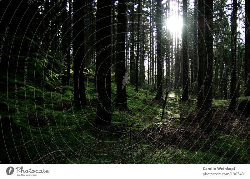 Into the woods. Umwelt Natur Landschaft Pflanze Erde Sonne Sonnenlicht Herbst Baum Sträucher Moos Wald Hügel Felsen Berge u. Gebirge ästhetisch kalt braun grün